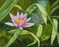 Lily on the Green Fine Art Print